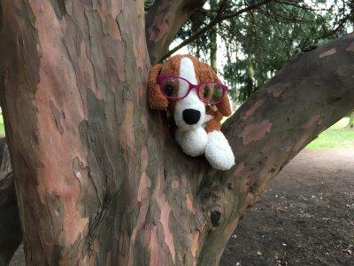 5-julie-frantisova-punta-v-bezva-schovavacce-na-strome.jpeg